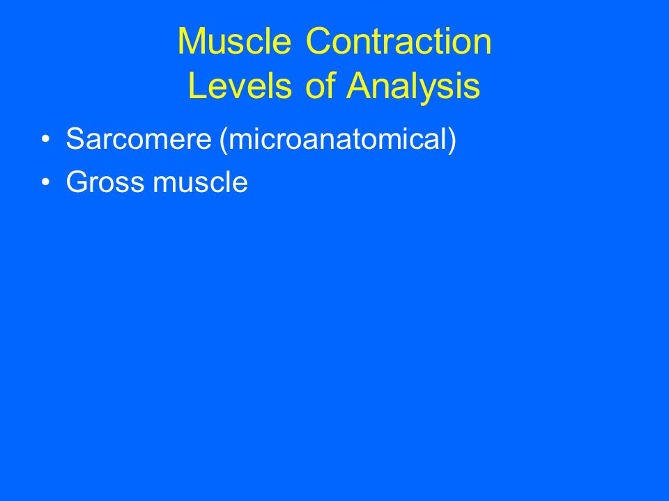Muscle Contraction Levels of Analysis