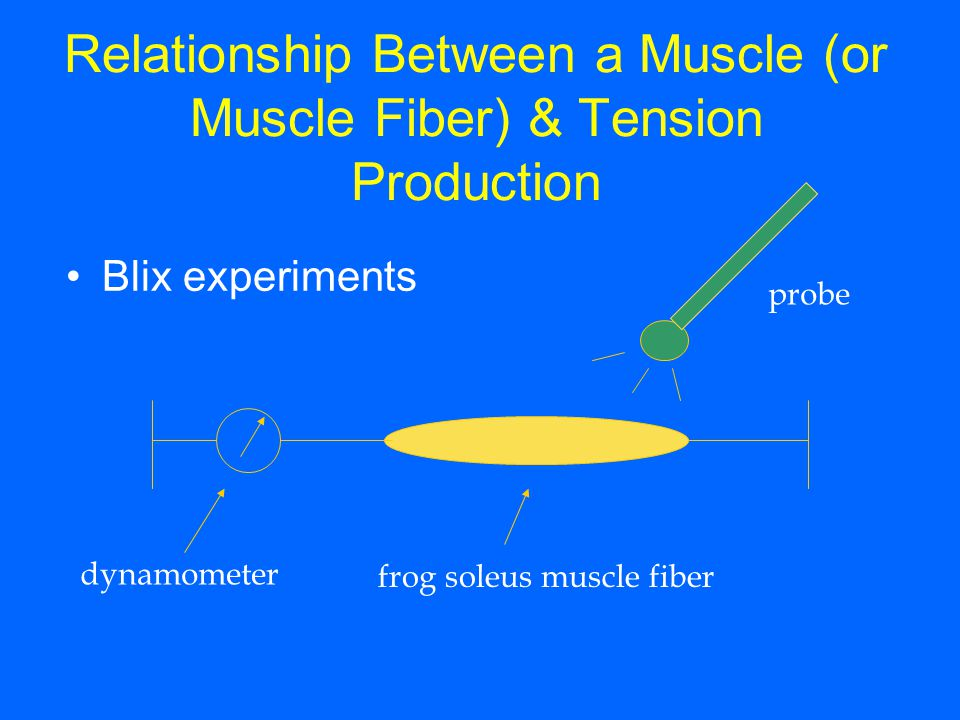 Relationship Between a Muscle (or Muscle Fiber) & Tension Production