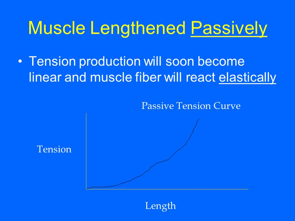 Muscle Lengthened Passively