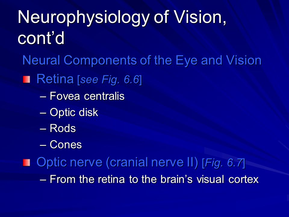 Neurophysiology of Vision, cont'd