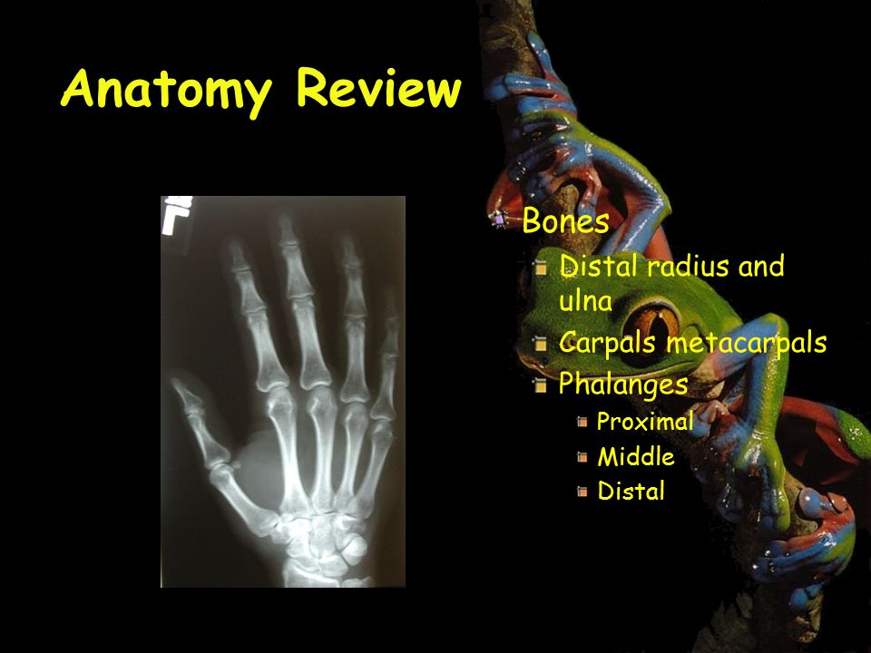Fine Finger Anatomy Mri Illustration - Human Anatomy Images ...