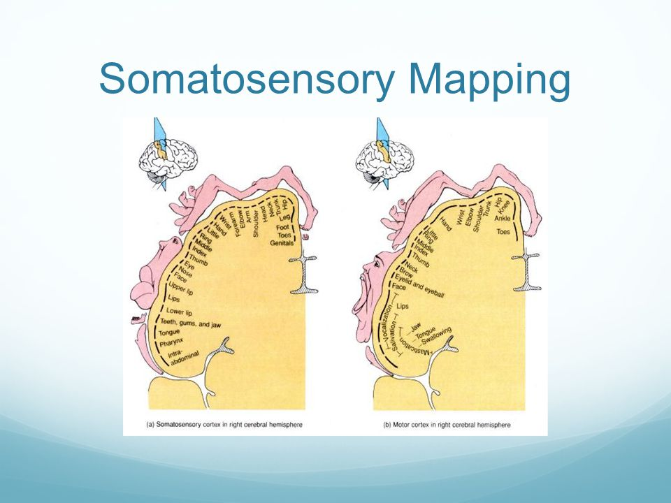 Somatosensory Mapping