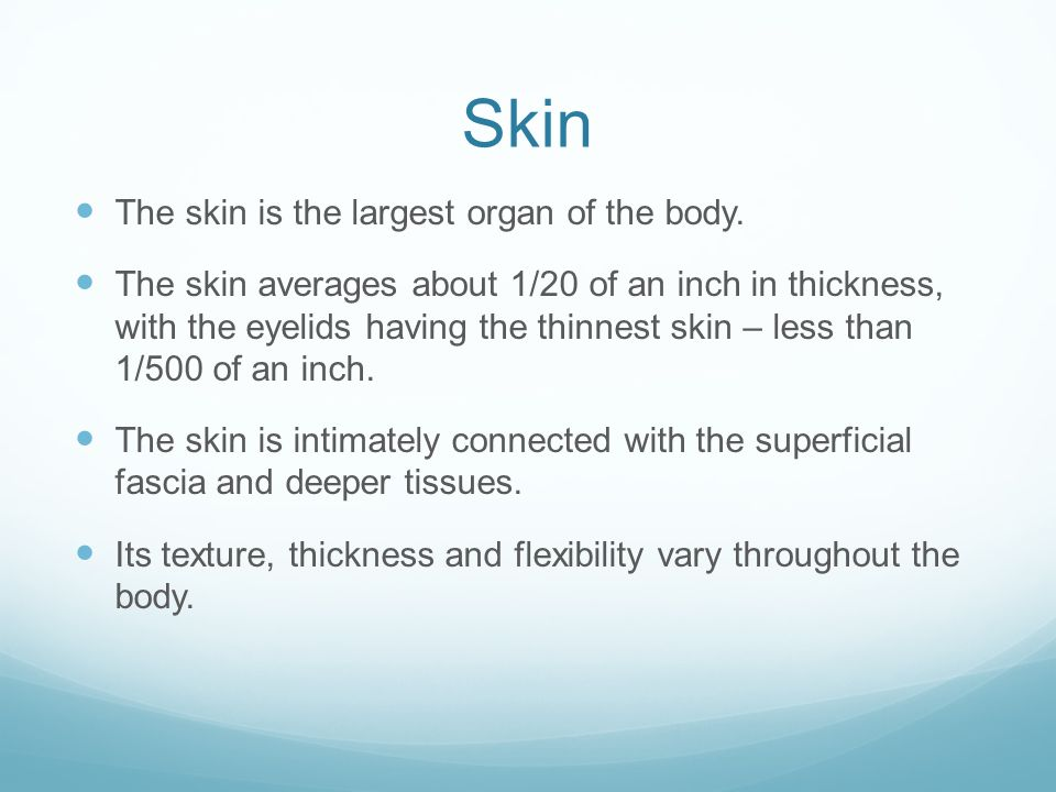Skin The skin is the largest organ of the body.
