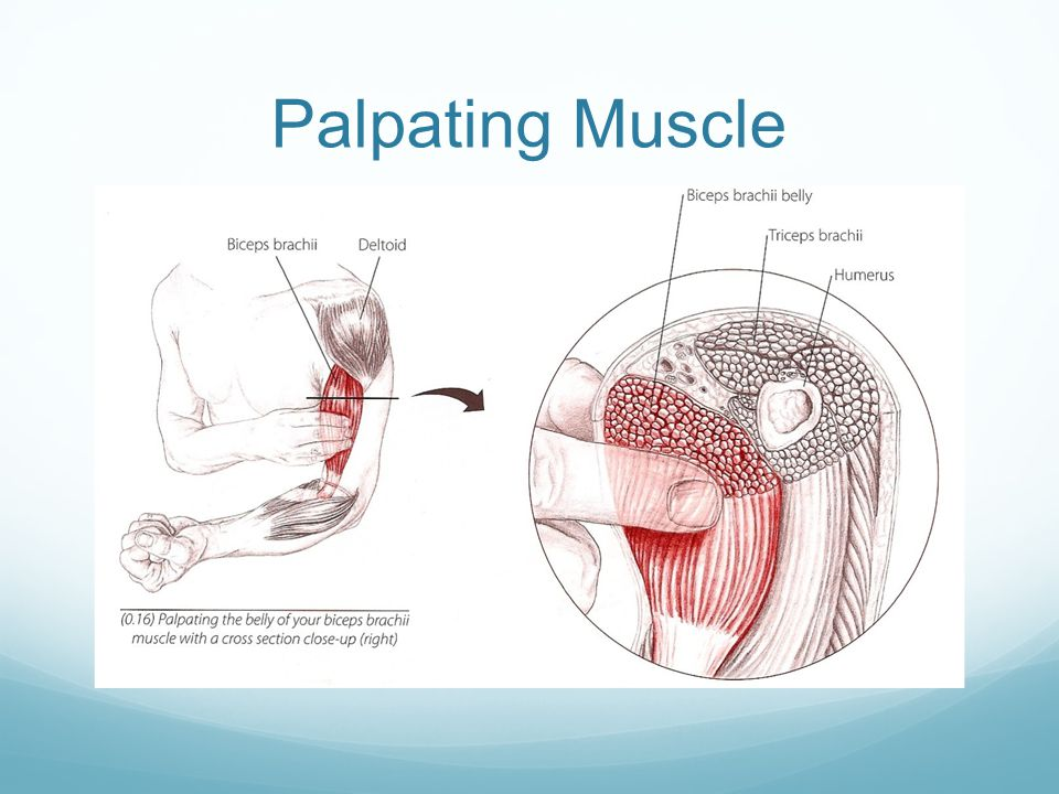 Palpating Muscle