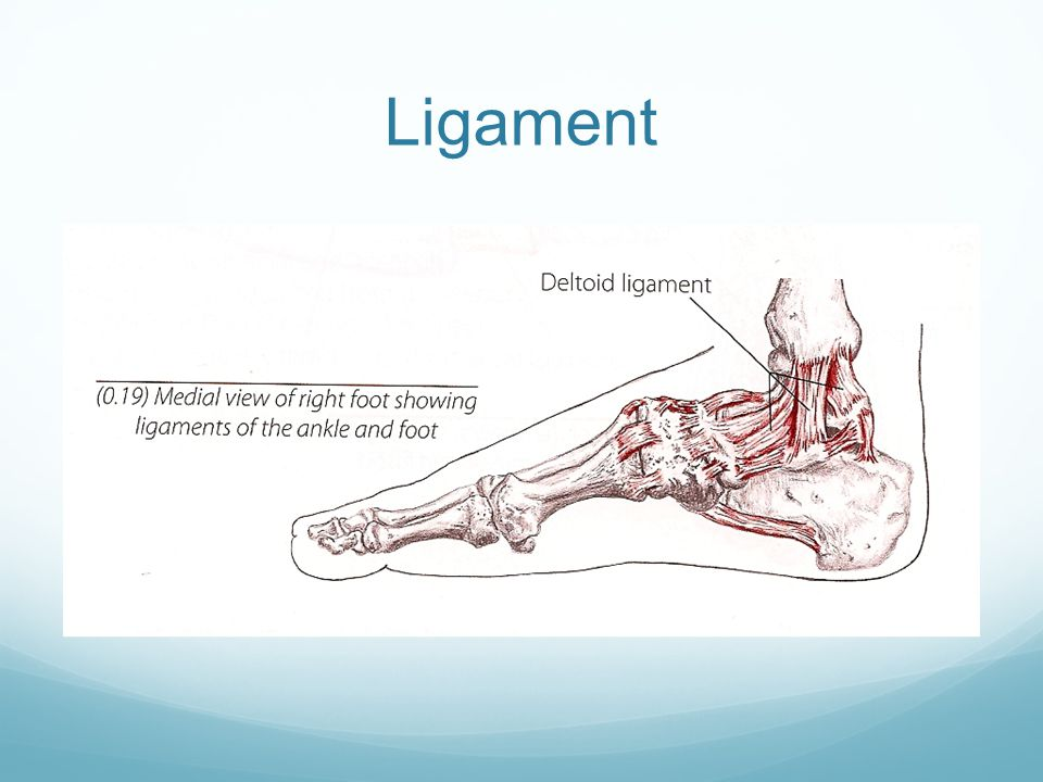 Ligament