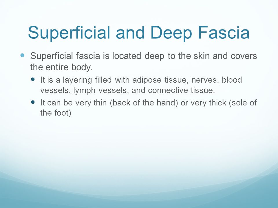 Superficial and Deep Fascia