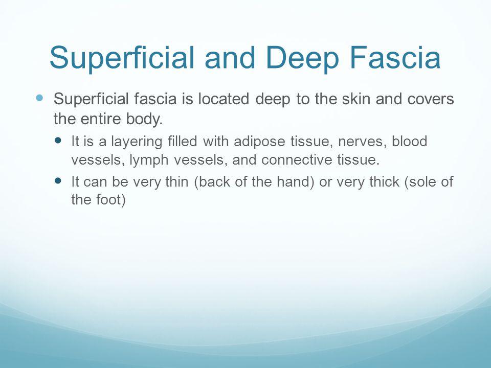 Superficial and Deep Fascia