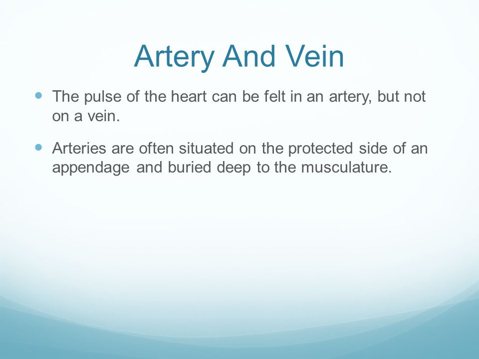 Artery And Vein The pulse of the heart can be felt in an artery, but not on a vein.