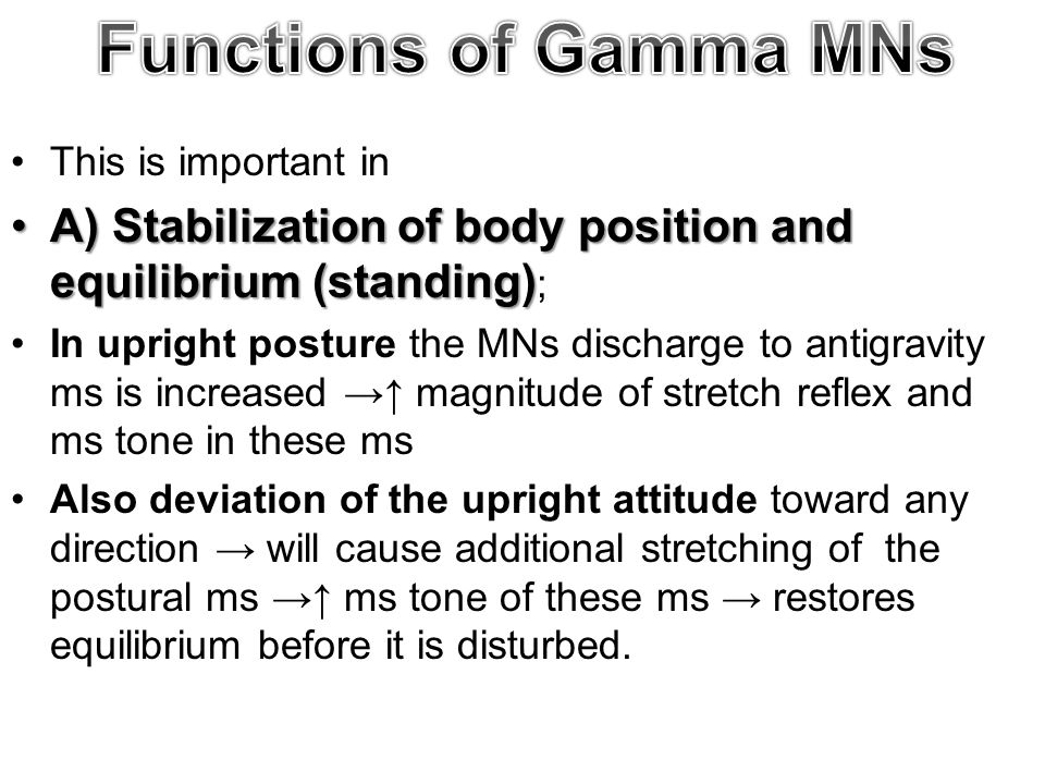 Functions of Gamma MNs This is important in. A) Stabilization of body position and equilibrium (standing);