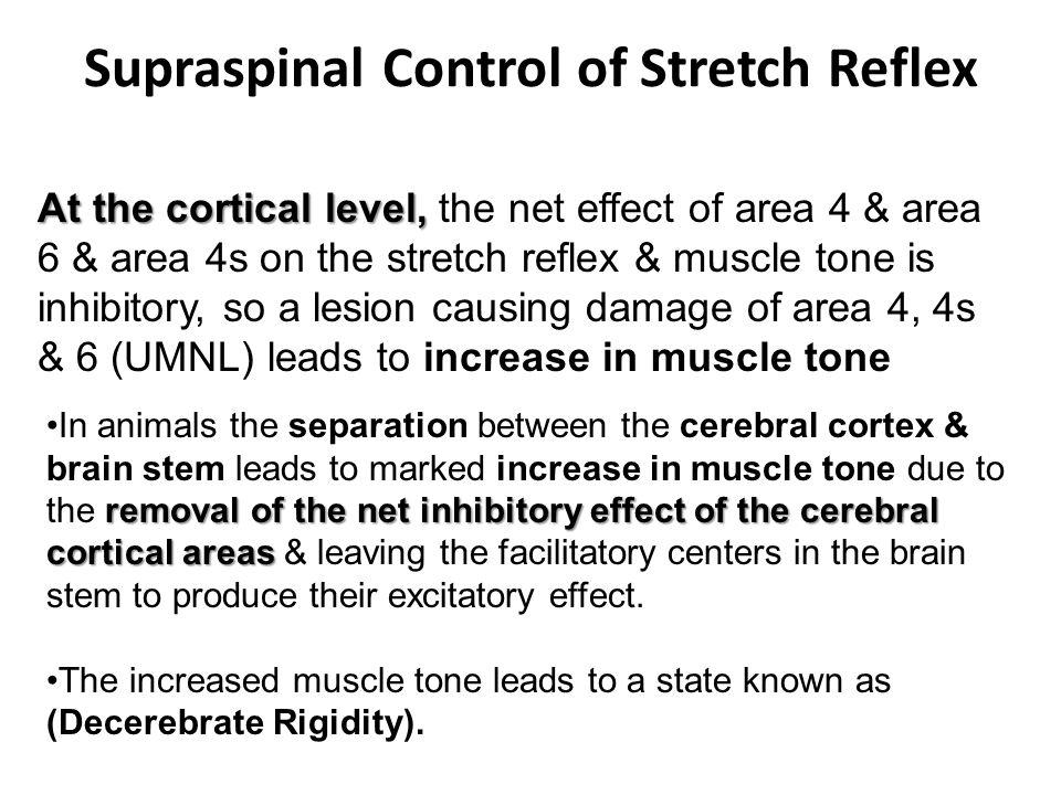 Supraspinal Control of Stretch Reflex