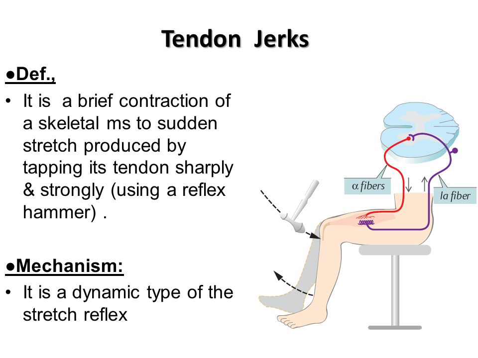 Tendon Jerks ●Def.,