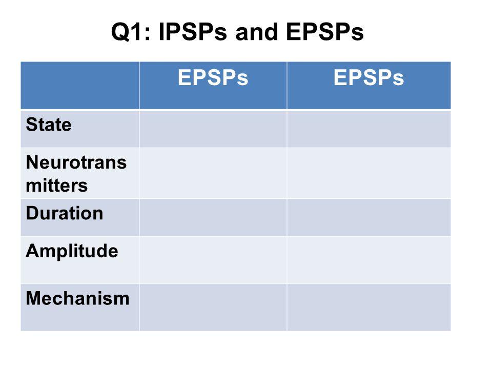 Q1: IPSPs and EPSPs EPSPs State Neurotransmitters Duration Amplitude