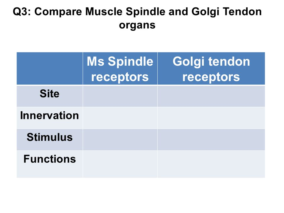 Q3: Compare Muscle Spindle and Golgi Tendon organs