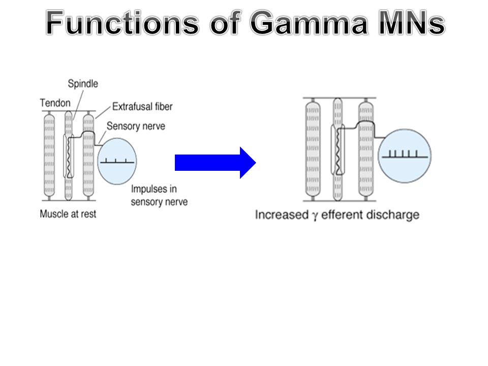 Functions of Gamma MNs 8