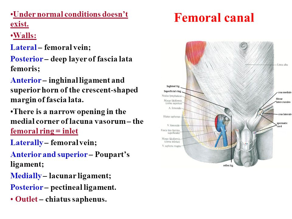 Femoral canal Under normal conditions doesn't exist. Walls: