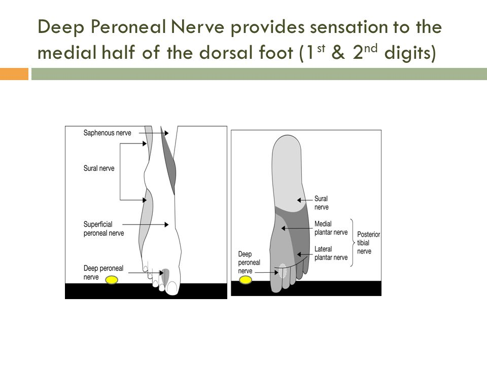 Deep Peroneal Nerve provides sensation to the medial half of the dorsal foot (1st & 2nd digits)