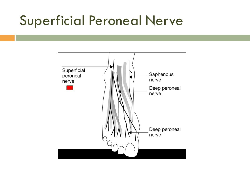 Superficial Peroneal Nerve