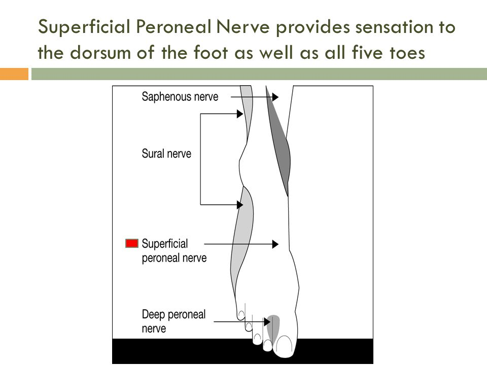 Superficial Peroneal Nerve provides sensation to the dorsum of the foot as well as all five toes