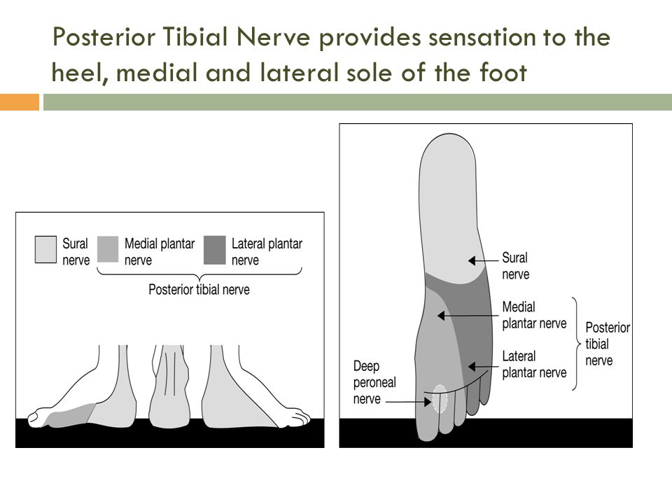 Posterior Tibial Nerve provides sensation to the heel, medial and lateral sole of the foot