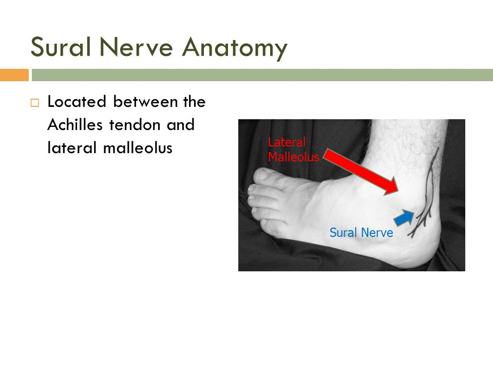 Sural Nerve Anatomy Located between the Achilles tendon and lateral malleolus. Lateral Malleolus.