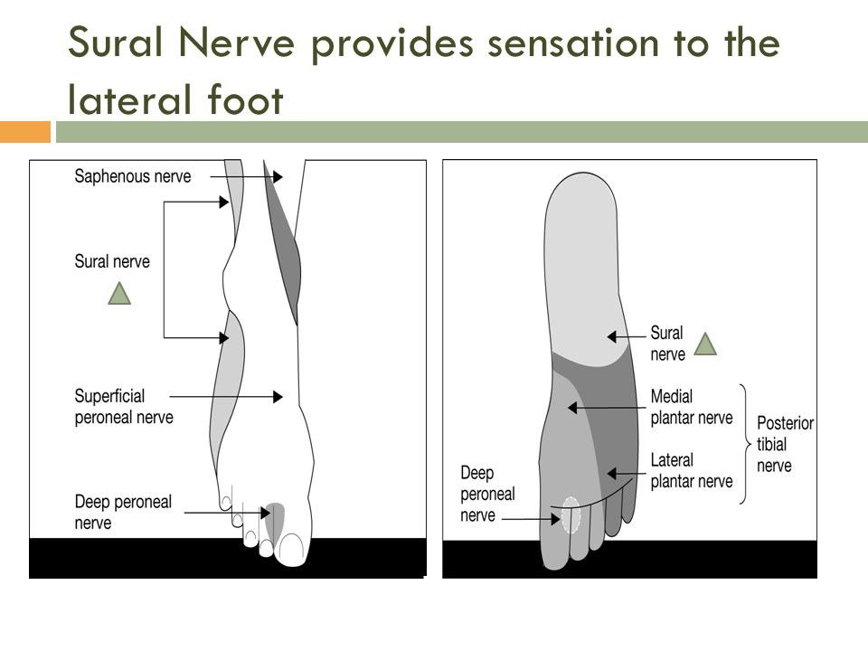 Sural Nerve provides sensation to the lateral foot