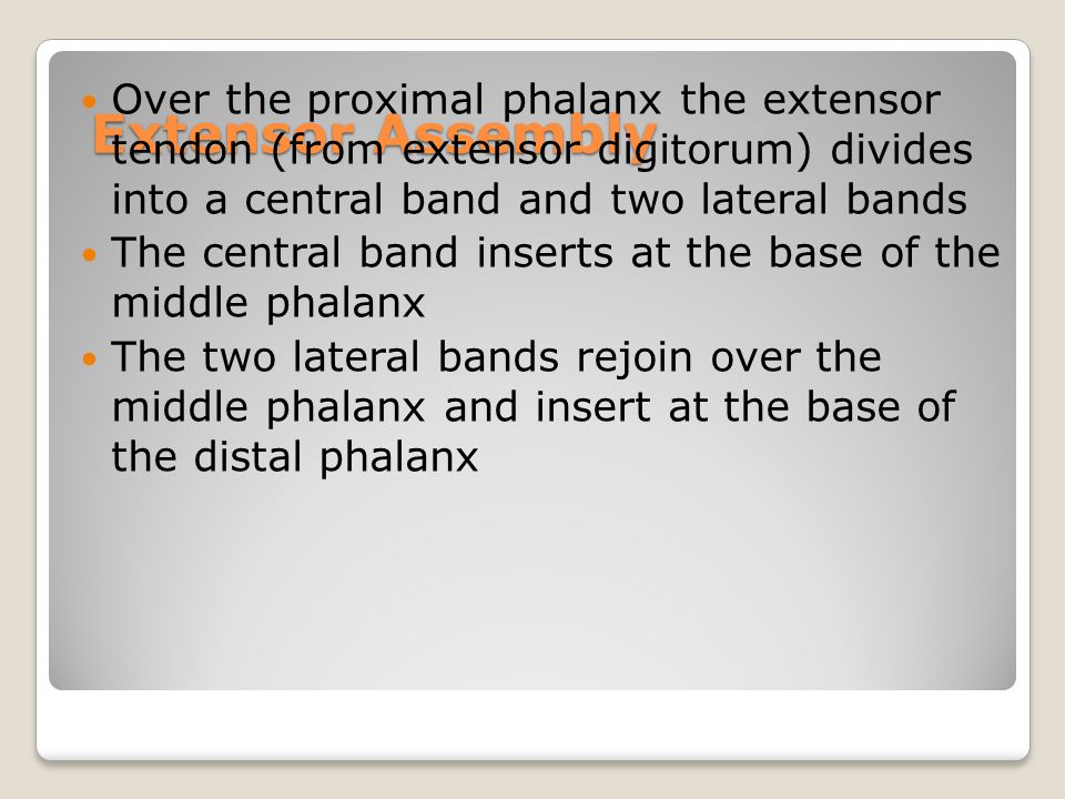 Extensor Assembly Over the proximal phalanx the extensor tendon (from extensor digitorum) divides into a central band and two lateral bands.