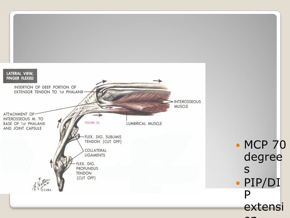 Extensor Mechanism Closed pack position
