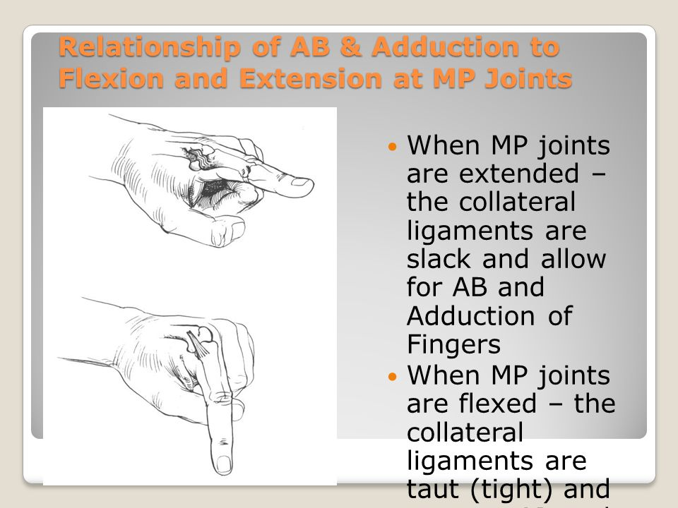 Relationship of AB & Adduction to Flexion and Extension at MP Joints