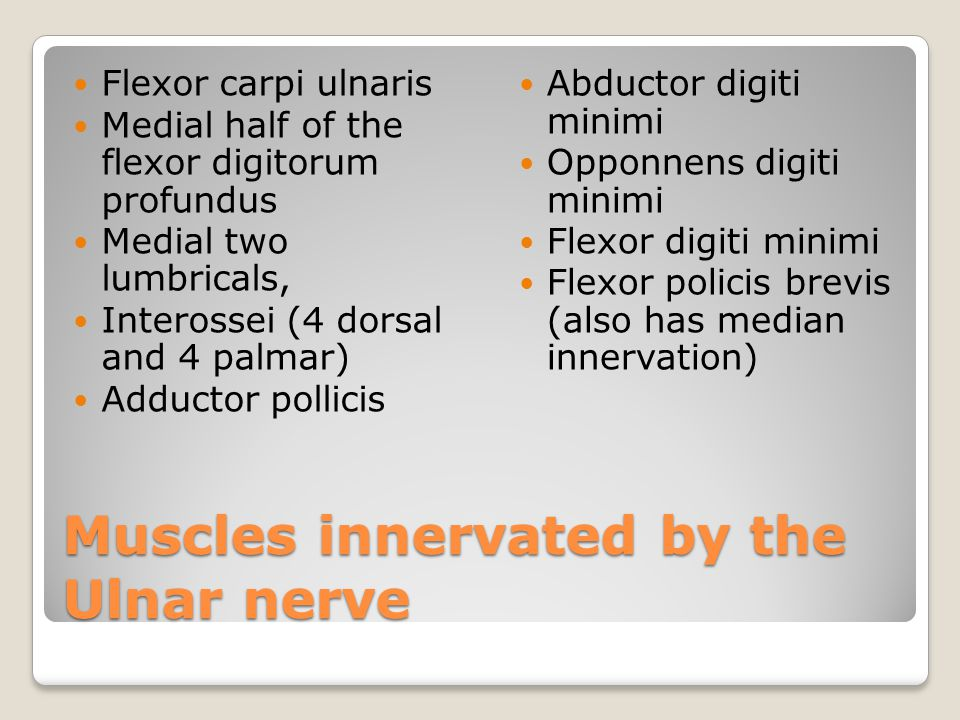 Muscles innervated by the Ulnar nerve