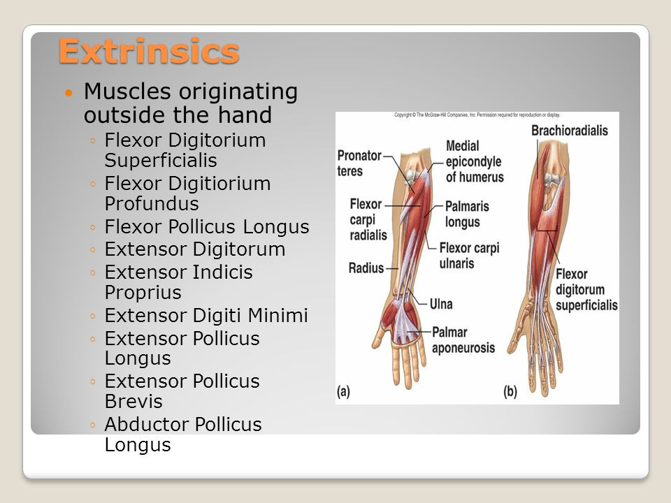 Extrinsics Muscles originating outside the hand