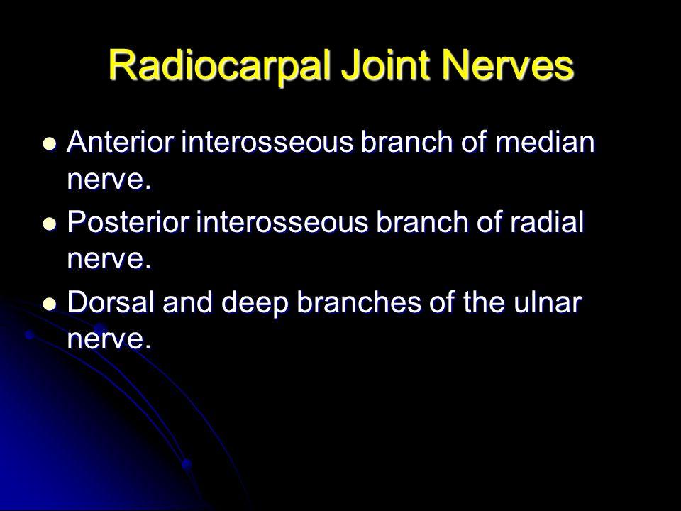 Radiocarpal Joint Nerves