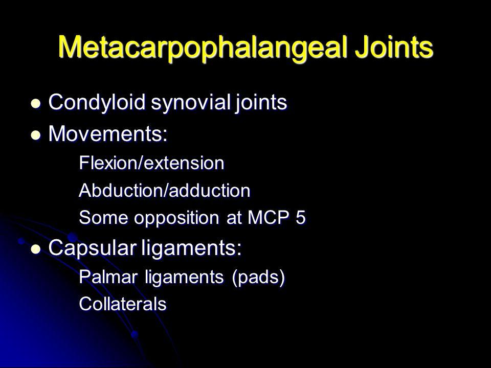 Metacarpophalangeal Joints