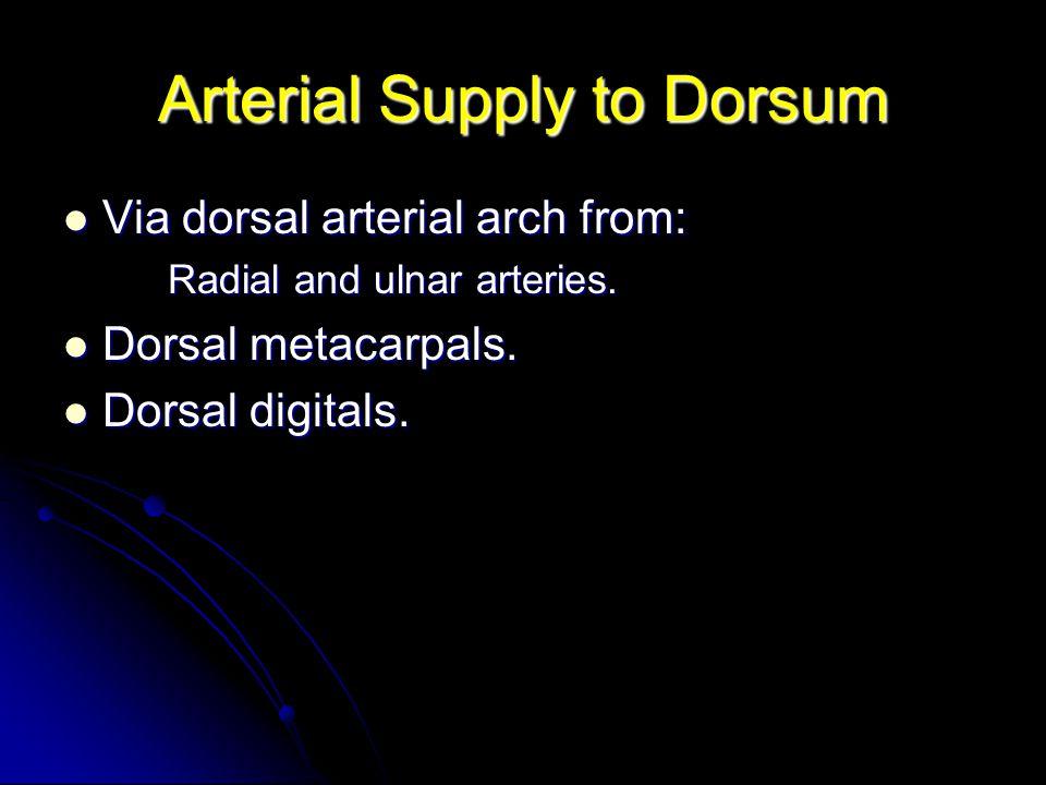 Arterial Supply to Dorsum