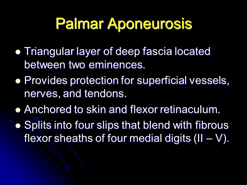 Palmar Aponeurosis Triangular layer of deep fascia located between two eminences. Provides protection for superficial vessels, nerves, and tendons.
