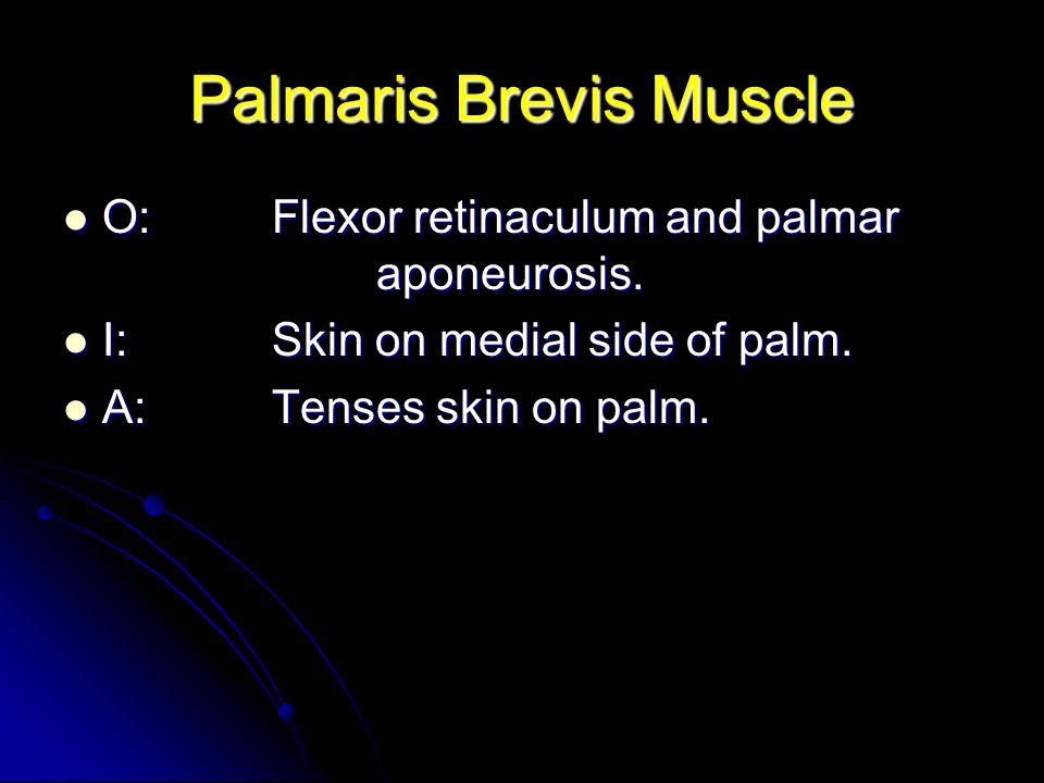 Palmaris Brevis Muscle