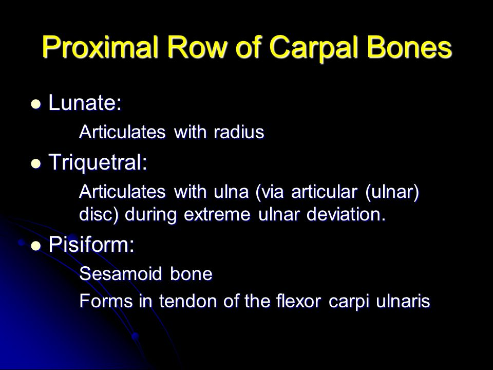 Proximal Row of Carpal Bones
