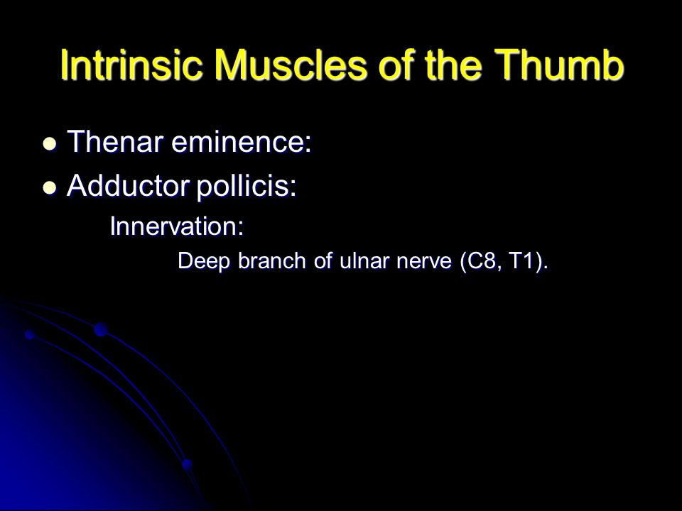 Intrinsic Muscles of the Thumb