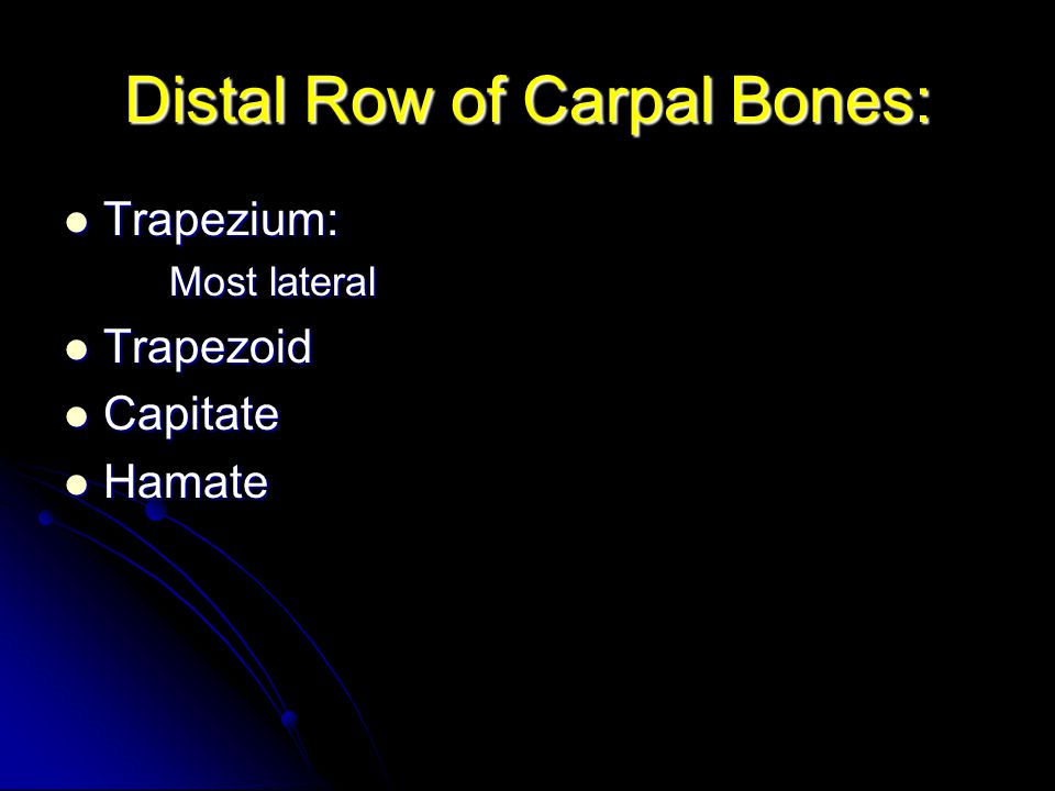 Distal Row of Carpal Bones: