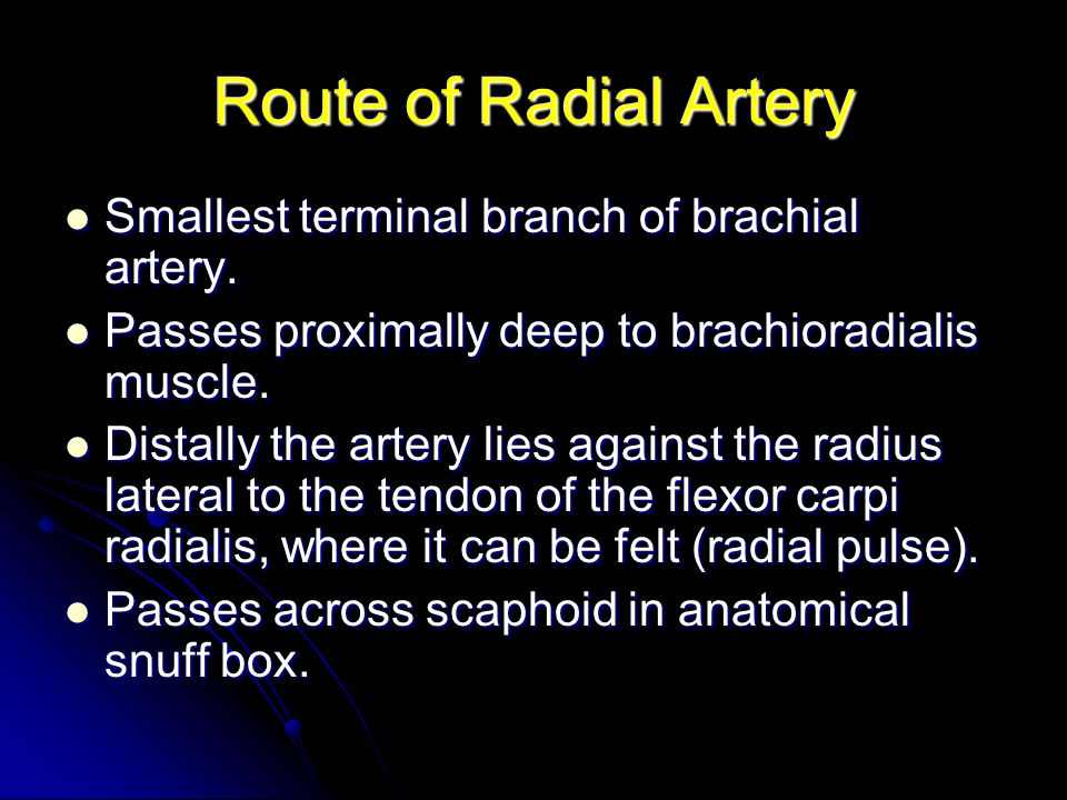 Route of Radial Artery Smallest terminal branch of brachial artery.