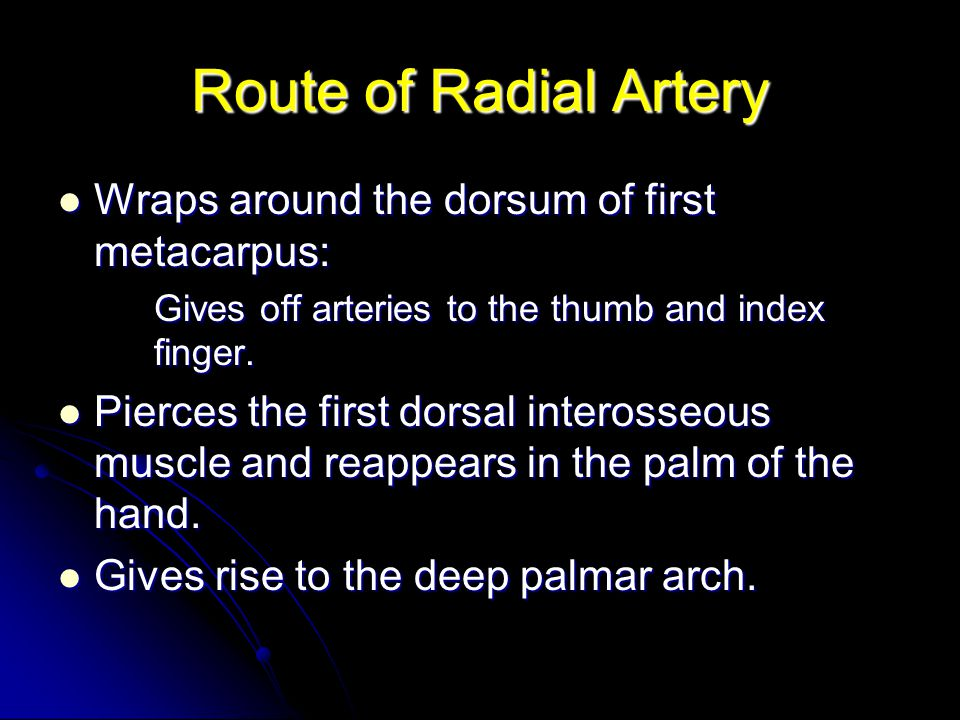 Route of Radial Artery Wraps around the dorsum of first metacarpus: