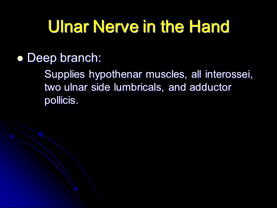 Ulnar Nerve in the Hand Deep branch: