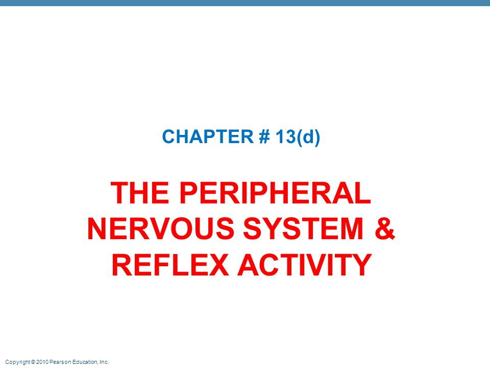 THE PERIPHERAL NERVOUS SYSTEM & REFLEX ACTIVITY - ppt video online ...