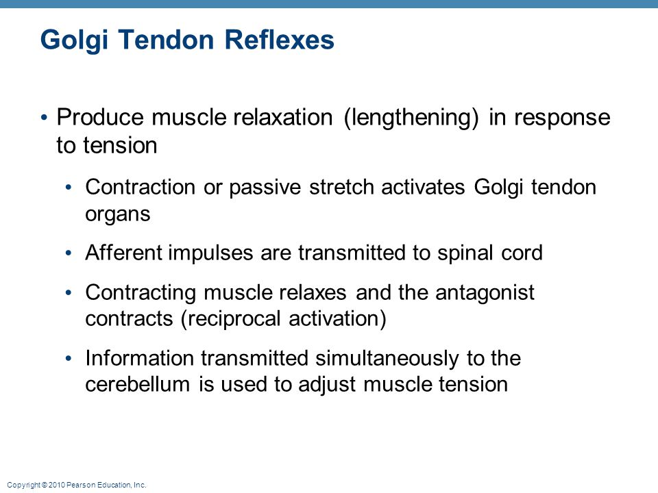 Golgi Tendon Reflexes Produce muscle relaxation (lengthening) in response to tension. Contraction or passive stretch activates Golgi tendon organs.