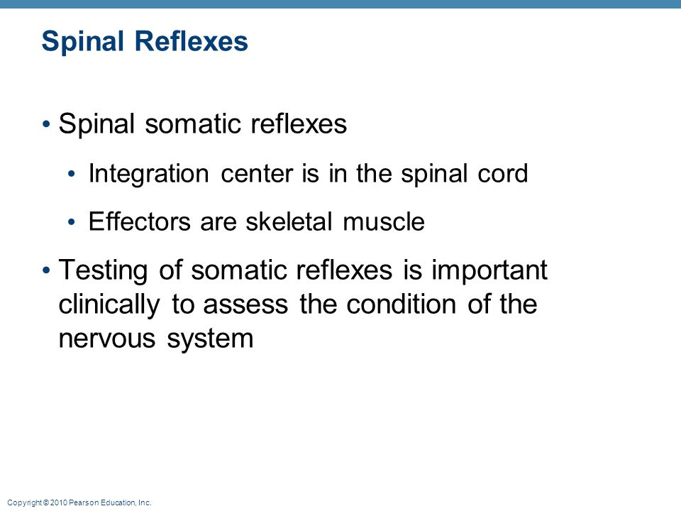 Spinal somatic reflexes