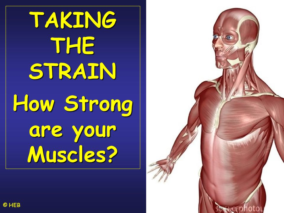 How Strong are your Muscles