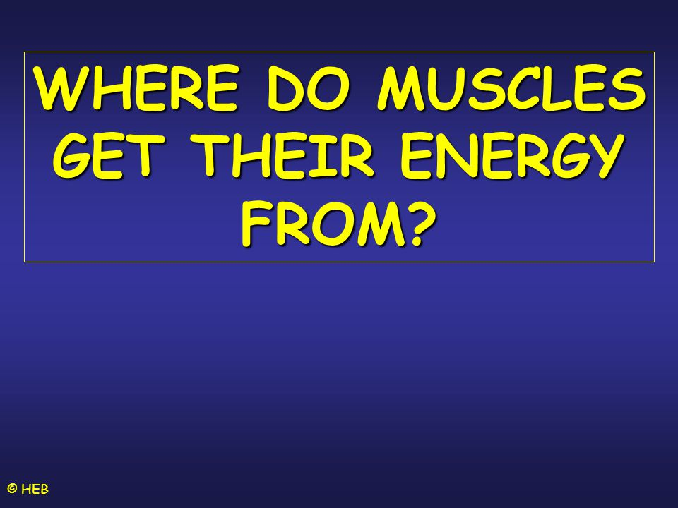 WHERE DO MUSCLES GET THEIR ENERGY FROM