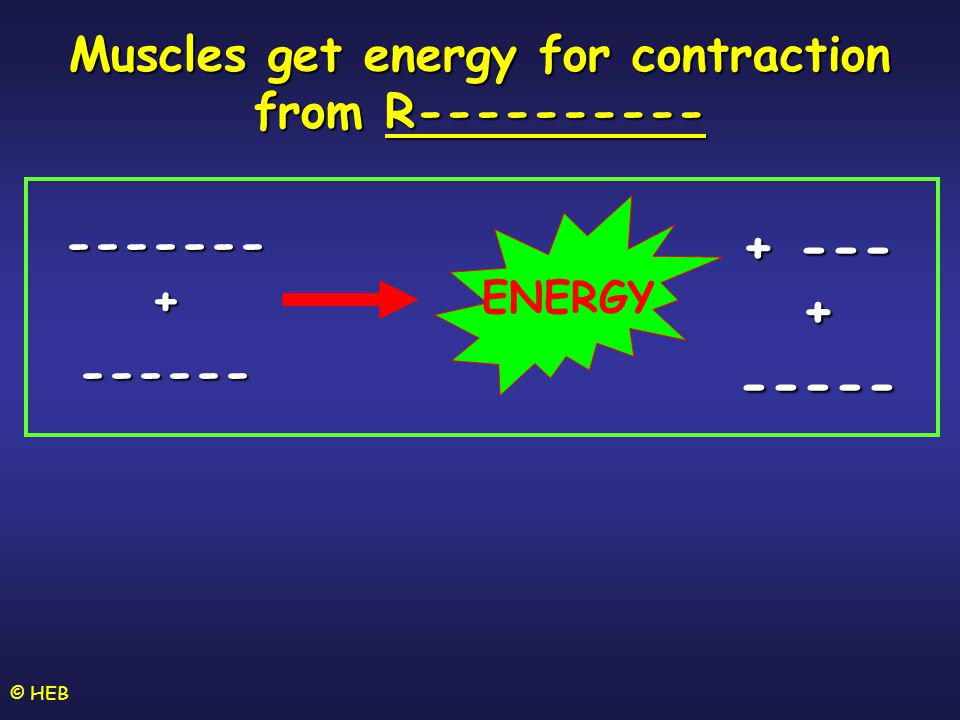 Muscles get energy for contraction from R----------