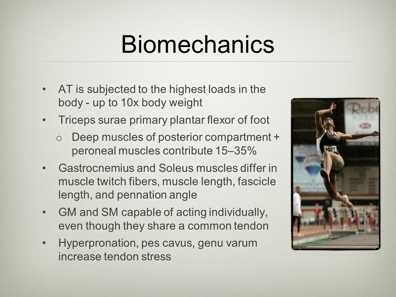 Biomechanics AT is subjected to the highest loads in the body - up to 10x body weight. Triceps surae primary plantar flexor of foot.