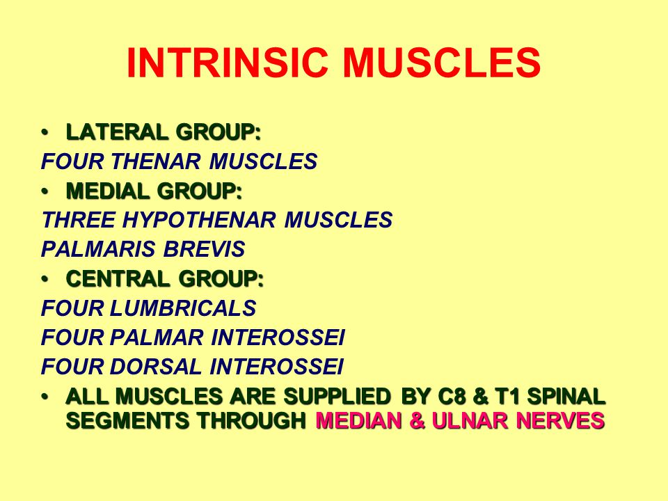 INTRINSIC MUSCLES LATERAL GROUP: FOUR THENAR MUSCLES MEDIAL GROUP: