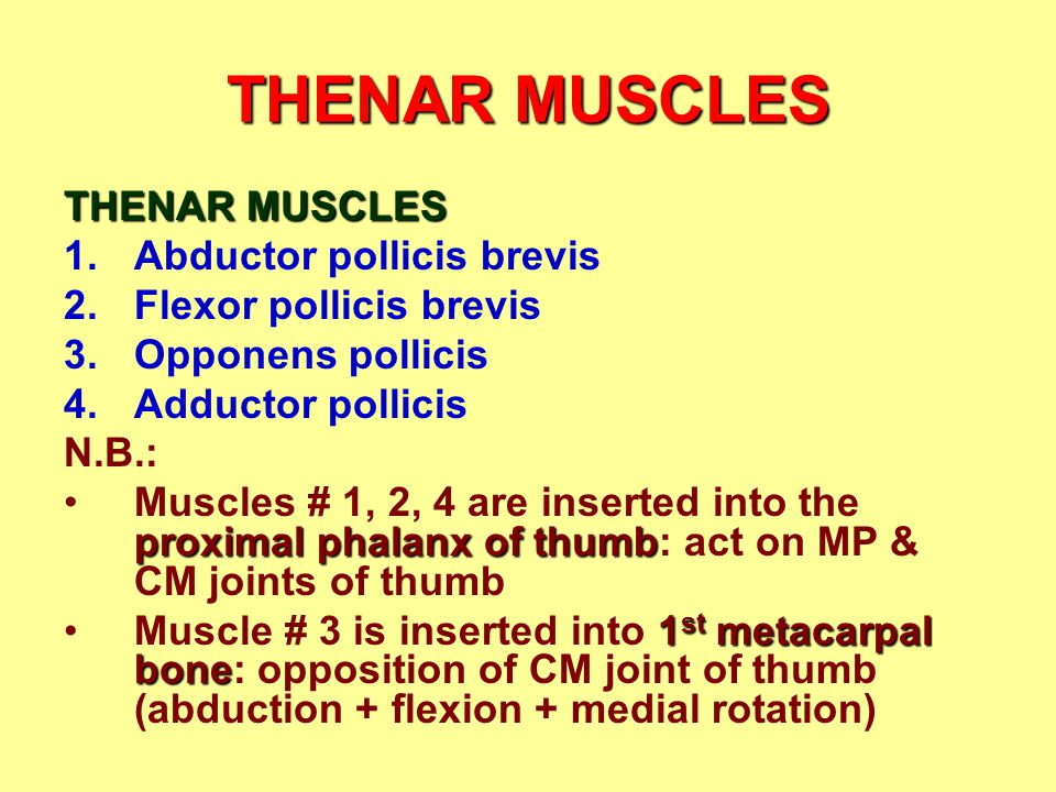 THENAR MUSCLES THENAR MUSCLES Abductor pollicis brevis